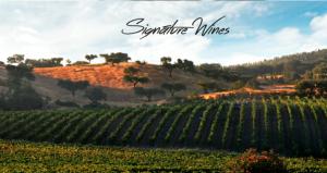 Portugalská vína - 1914348 -